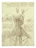 Spinal Column Study