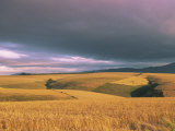Overberg Landscape  Western Cape  South Africa  Africa