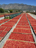 Dried Tomatoes at Montagu  Little Karoo  South Africa  Africa