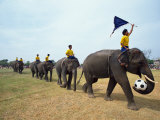 Line of Elephants in a Soccer Team During November Elephant Round-Up Festival  Surin City  Thailand