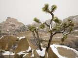 Rare Winter Snowfall  Hidden Valley  Joshua Tree National Park  California  USA