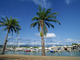 Marina at Port Douglas  Queensland  Australia  Pacific