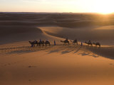 Dromedaries Taking Tourists on a Sunset Ride  Merzouga  Morocco  Sahara Desert