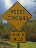 Close-Up of a Moose Crossing Yellow Road Sign  New England  United States of America  North America