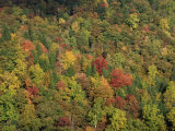 Aerial View over Autumnal Forest Canopy  Near Green Knob  Blue Ridge Parkway  North Carolina  USA