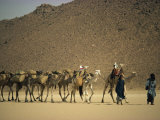 Tuareg People Leading Camel Train across Desert  Algeria  North Africa  Africa