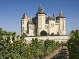 Vineyards around the Chateau De Saumur  Maine-et-Loire  Pays De La Loire  France  Europe