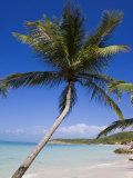 Dickenson Bay Beach  Antigua  Leeward Islands  West Indies  Caribbean