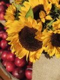 Sunflowers and Apples  the Hamptons  Long Island  New York State  USA