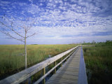 Viewing Walkway  Everglades National Park  Florida  United States of America  North America