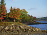 Rocky Shoreline and Trees at the Scenic Harbour  Bar Harbour  Maine  New England  USA