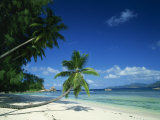 Leaning Palm Tree and Beach  Anse Severe  La Digue  Seychelles  Indian Ocean  Africa