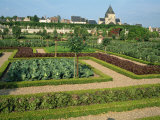 Herb and Kitchen Gardens  Chateau Villandry  Centre  France  Europe