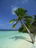Palm Tree on a Tropical Beach on Embudu in the Maldive Islands  Indian Ocean