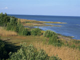 On the Coast of Muhu  an Island to the West of Tallinn  Muhu  Estonia  Baltic States  Europe