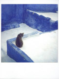 Polaroid of a Cat Sitting on Whitewashed Path  Chefchaouen  Morocco  North Africa  Africa