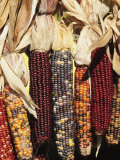 Indian Ornamental Corn The Hamptons  Long Island  New York State  USA