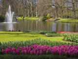 Keukenhof  Park and Gardens Near Amsterdam  Netherlands  Europe