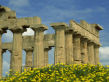 Temple Amongst the Spring Flowers  Selinunte  Established 5th Century BC  Sicily  Italy  Europe
