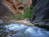 Virgin River Flowing Through the Virgin Narrows  Zion National Park  Utah  USA