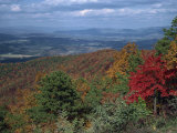 Trees in Fall Colours with Agricultural Land in the Background in Blue Ridge Parkway  Virginia  USA