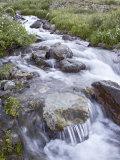 Cascades  American Basin  Uncompahgre National Forest  Colorado  USA