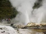 Pohutu Geyser at Te Puia Wakarewarewa Geothermal Village  Rotorua  Taupo Volcanic Zone  New Zealand