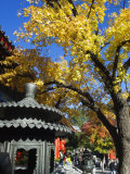 Autumn Colours at a Temple in Fragrant Hills Park in the Western Hills  Beijing  China