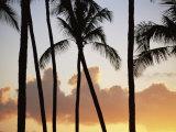 Salt Water Pond State Park  Kauai  Hawaii  USA  Pacific