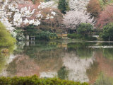 Garden of Ryoanji Temple  Kyoto  Honshu Island  Japan