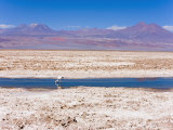 Flamingo Breeding Site  Laguna Chaxa  Salar De Atacama  Atacama Desert  Norte Grande  Chile