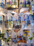 Fish in Bags in Tung Choi Street  Mongkok  Hong Kong  China