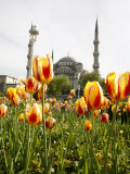 Blue Mosque  Istanbul  Turkey  Europe
