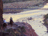 Mules Taking Tourists Along the Colorado River Trail  Grand Canyon  Arizona  USA