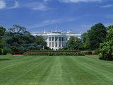 White House  Washington DC  United States of America  North America