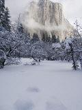 Fresh Snow Fall on El Capitan in Yosemite Valley  Yosemite National Park  California  USA