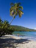 Palms and Beach at Magens Bay  St Thomas  US Virgin Islands  West Indies