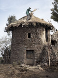 Man Thatches the Roof of His House in the Town of Lalibela  Ethiopia  Africa