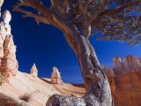 Peekaboo Trail in Bryce Canyon National Park  Utah  USA