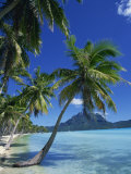 Bora Bora  Tahiti  Society Islands  French Polynesia  Pacific Islands  Pacific