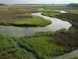 Wetlands of the Cooper River  North Charleston Area  South Carolina  USA