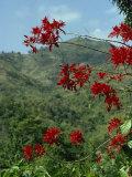 Landscape  Trinidad  West Indies  Caribbean  Central America