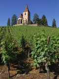 Vines Lead Up to Church Above the Vineyard at Hunawihr in Alsace  France  Europe