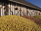 Piles of Cider Apples Used for Making Calvados  Domaine Coeur De Lion  Normandie  France  Europe