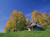 Wooden Barn Building and Trees in Fall Colours  Vermont  New England  USA