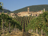 Vineyard in the Chianti Classico Region North of Siena  Tuscany  Italy  Europe