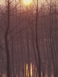 Bare Trees Silhouetted by Winter Sunset  and Reflected in Pond