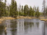 Fly Fishing  Firehole River  Yellowstone National Park  UNESCO World Heritage Site  Wyoming  USA