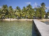 Jetty  Tobaco Caye  Belize  Central America