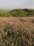 Countryside Near Pienza Val D'Orcia  Siena Province  Tuscany  Italy  Europe
